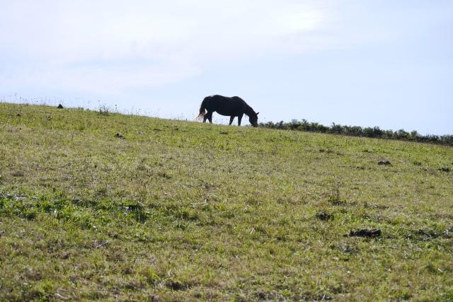 Cueto faro walk pantheon horse-riding  William Rowland Jose Jackson