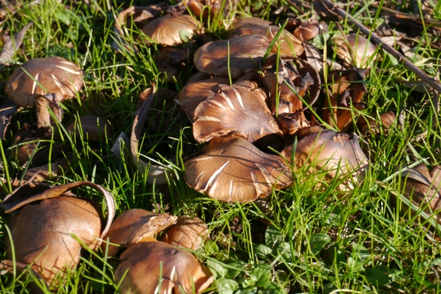 park parque llamas santander mushrooms