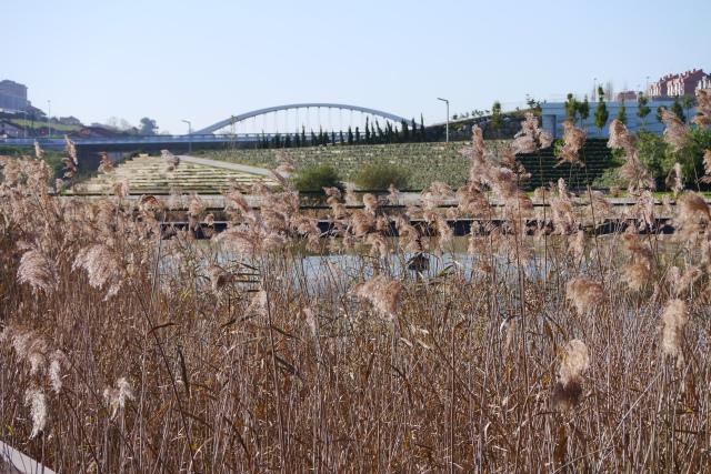 santander llamas park parque bridge reeds