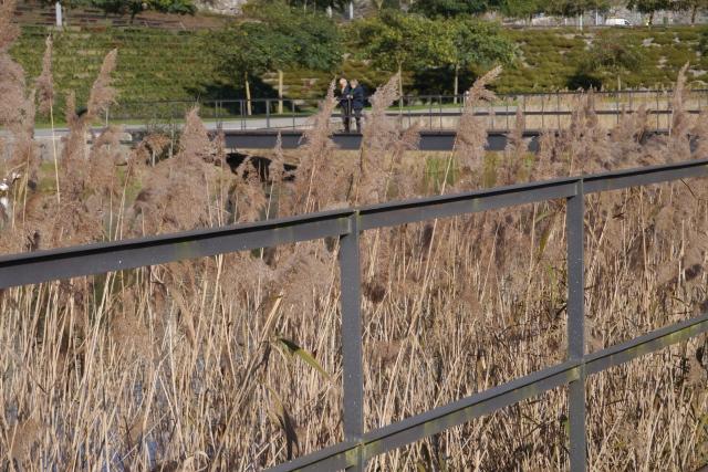 santander llamas park parque reeds