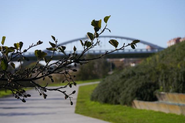 santander llamas park parque bridge