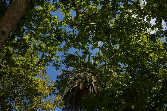 Pereda Gardens Botin Centre Santander Renzo Piano trees designer